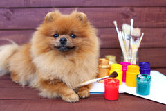 Dog artist. Beautiful pomeranian dog with paints and brushed on wooden background. Clever spitz Royalty Free Stock Image