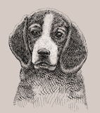 Dog artistic drawing Royalty Free Stock Photos