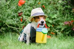 Free Dog As Cute Gardener Wearing Hat And Apron With Colorful Watering Can Stock Photos - 103389073