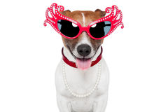 Dog as drag queen Stock Photo