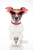 Dog as drag queen Stock Photos