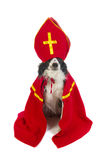Dog as Dutch Sinterklaas Royalty Free Stock Photo