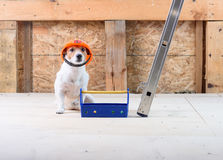 Dog as funny builder wearing helmet at construction site with toolbox. Dog sitting with toy toolbox Royalty Free Stock Photo