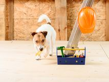 Dog as funny repairman at building house with wrench and toolbox Stock Image