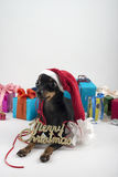 Dog as a gift on new year and Christmas Royalty Free Stock Photography