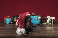 Dog as a gift on new year and Christmas Royalty Free Stock Images