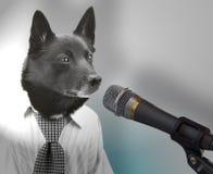 Dog as politician Stock Photography