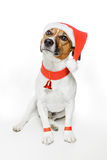 Dog as santa Royalty Free Stock Photography