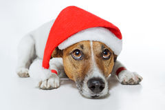 Dog as santa Royalty Free Stock Photos