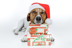 Dog as santa Stock Photo