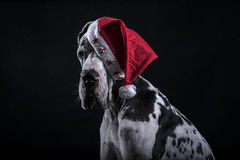 Dog as Santa Claus for new year Royalty Free Stock Image