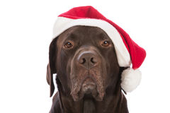 Dog as Santa Claus with red cap. On white background Stock Photography