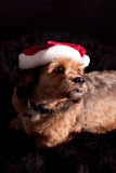 Dog as Santa Stock Photography