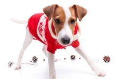 Dog as santa Royalty Free Stock Images