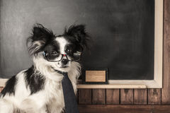 Dog as a school teacher Stock Images