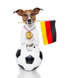 Dog as soccer with medal and  flag Stock Photo