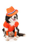 Dog as soccer supporter Stock Image