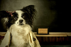 Dog as teacher or student girl thinking vacation Royalty Free Stock Images
