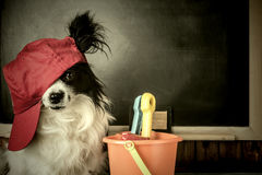 Dog as teacher or student thinking  vacation Royalty Free Stock Images