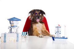 Dog as a travel salesman stock photo