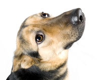 Dog asking Royalty Free Stock Photography