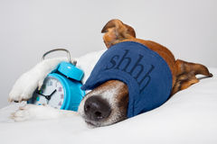 Dog asleep. Dog sleeping with alarm clock and sleeping mask