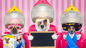 Dog At The Hairdressers Or Groomer Royalty Free Stock Photography