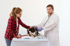 Dog att få kontrollerat på veterinärkliniken med thirägaren royaltyfria bilder