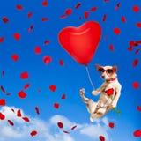 Dog att hänga på ballongen i luft för valentindag royaltyfria bilder
