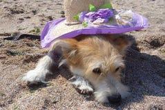 Dog att ligga på sand med hatten på hans baksida royaltyfri fotografi