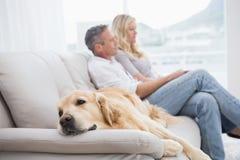 Dog att ligga på soffan med parsammanträdet bakom royaltyfri fotografi