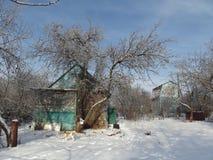 Dog att spela i den gamla trädgården på en vinterafton Arkivfoton