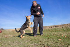 Dog attacks on humans. Aggressive attack dog shepherd biting on man's hand stock photos