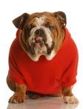 Dog with attitude Stock Photo
