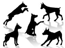 Dog attitudes. Dog silhouettes in different poses and attitudes Royalty Free Stock Photo