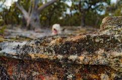 Dog in the Australian Bush royalty free stock photography