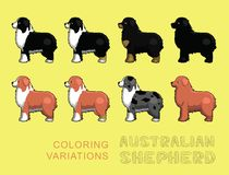 Dog Australian Shepherd Coloring Variations Vector Illustration Royalty Free Stock Image