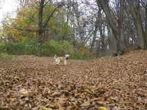 Dog in autumn forest royalty free stock image