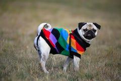 Dog in autumn meadows Stock Photos