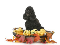 Dog with autumn setting Royalty Free Stock Photos