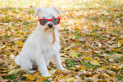 Dog on the autumn sun Royalty Free Stock Images