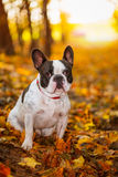 Dog in autumnal scenery Stock Photo