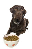 Dog Awaiting his Food Royalty Free Stock Photography
