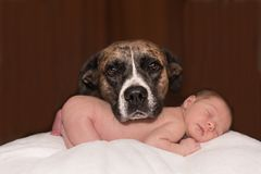 Dog, Baby, Animal, Small, Canine Royalty Free Stock Photography