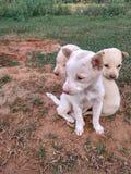 Dog baby stock photo