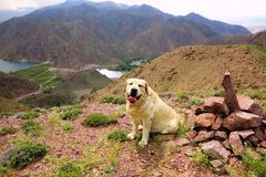 The dog on the background of a mountain lake royalty free stock photography
