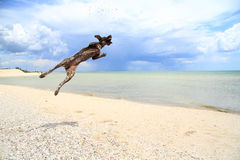 Dog on a background of sea. Beautiful sea and jump dog for shells royalty free stock photography