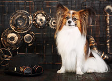 Dog on a background in the style of steampunk Stock Photography