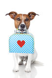 Dog with bag Stock Images