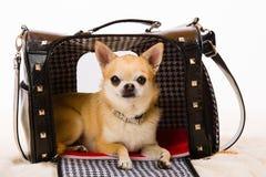Dog and bag Royalty Free Stock Image